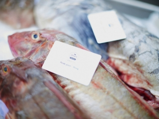 6 great places for deliciously fresh fish