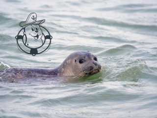 Knokke Boat Seal Discovery