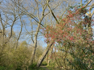 Trees and shrubs in their autumn finery